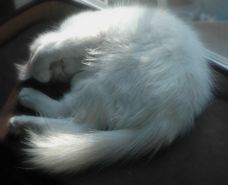 Sleepyboy