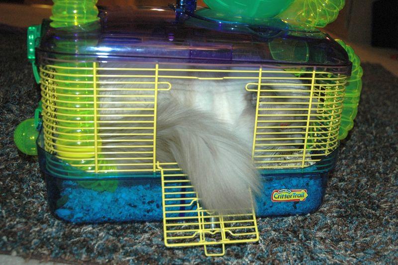 Winny cage2