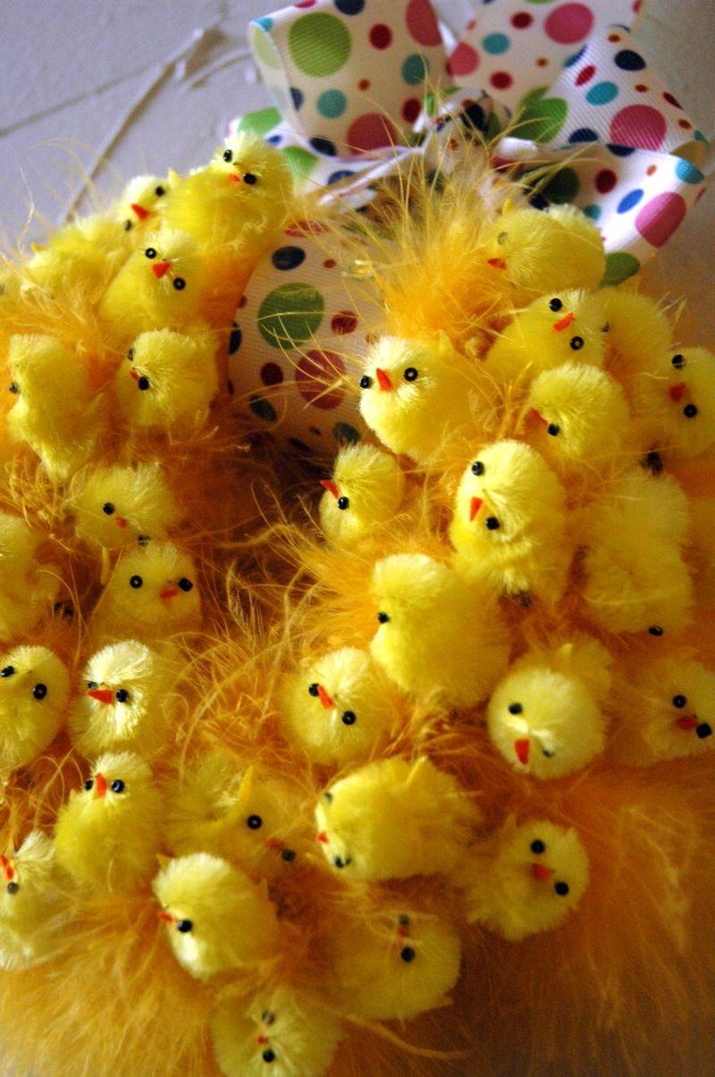 Chick closeup
