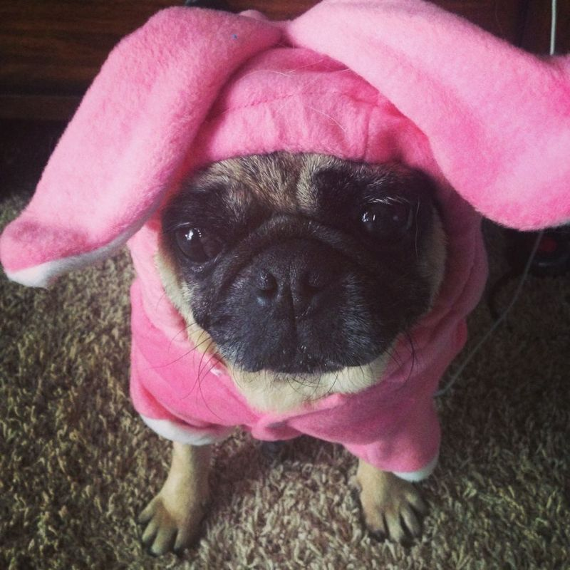 Bessie the Easter Bunny