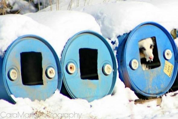 1_8_14-Sprakers-Puppy-Mill4-590x393