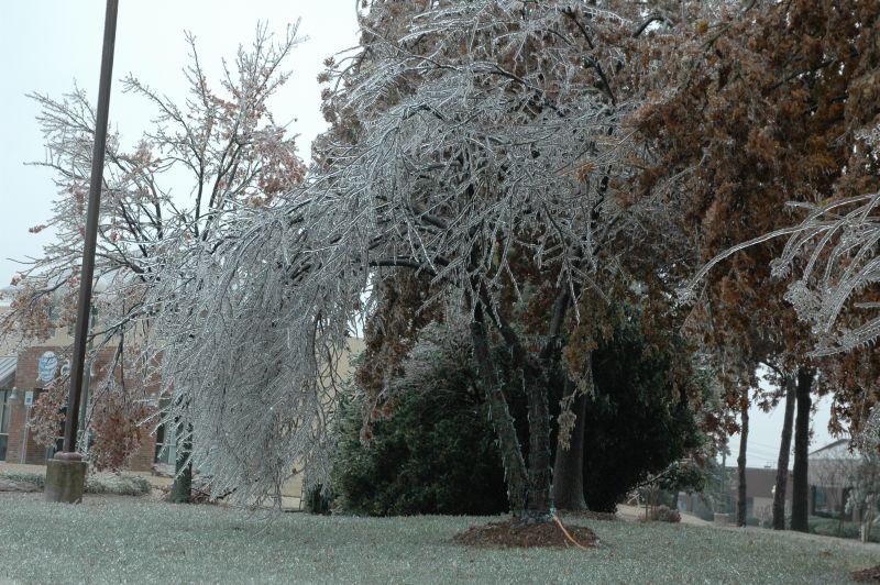 Ice_trees1